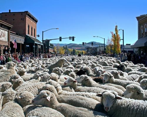 Trailing of the Sheep in Sun Valley
